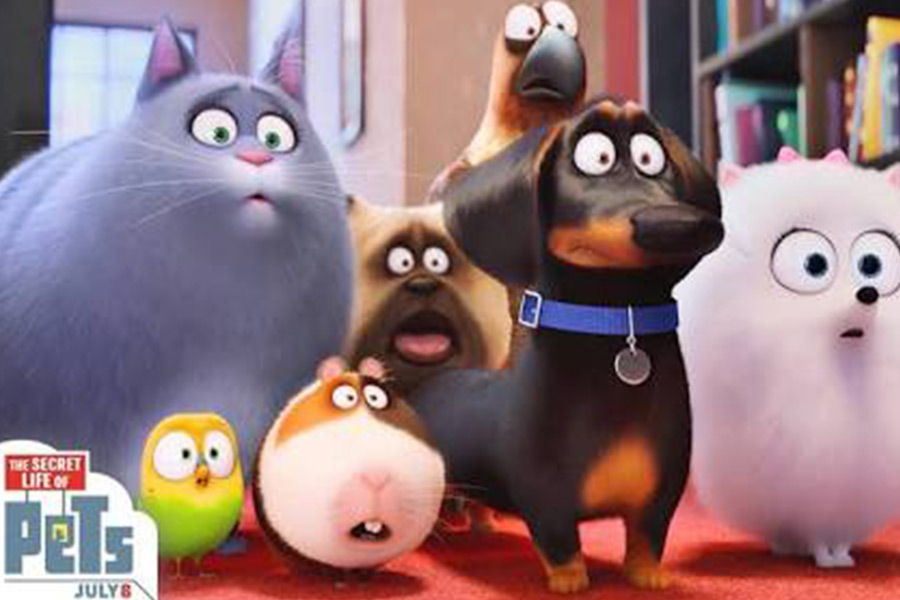 Too Much Happens Too Soon In The Secret Life Of Pets, Film Companion