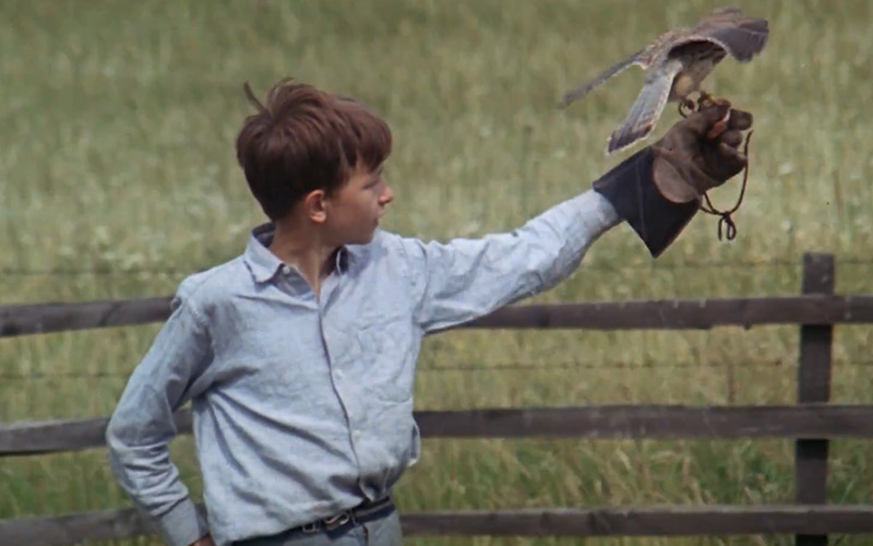 What Makes Us Our Brother's Executioner? On Ken Loach's Kes, Film Companion